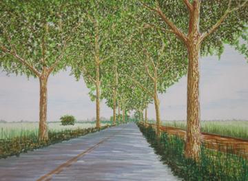 Causeway trees